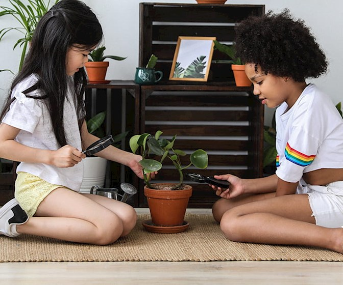 Two girls pruning chinese money plant (Pilea peperomioides)